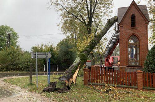 14.10.2020 - Powalone drzewo